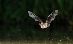 Nuit européenne de la chauve-souris