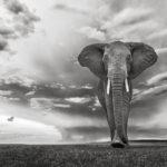 Grand Prix photos : exposition place Blanqui